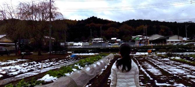 埼玉県飯能市 戸田さんの畑